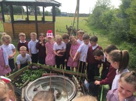 P1 visit Woodlawn Garden Project.